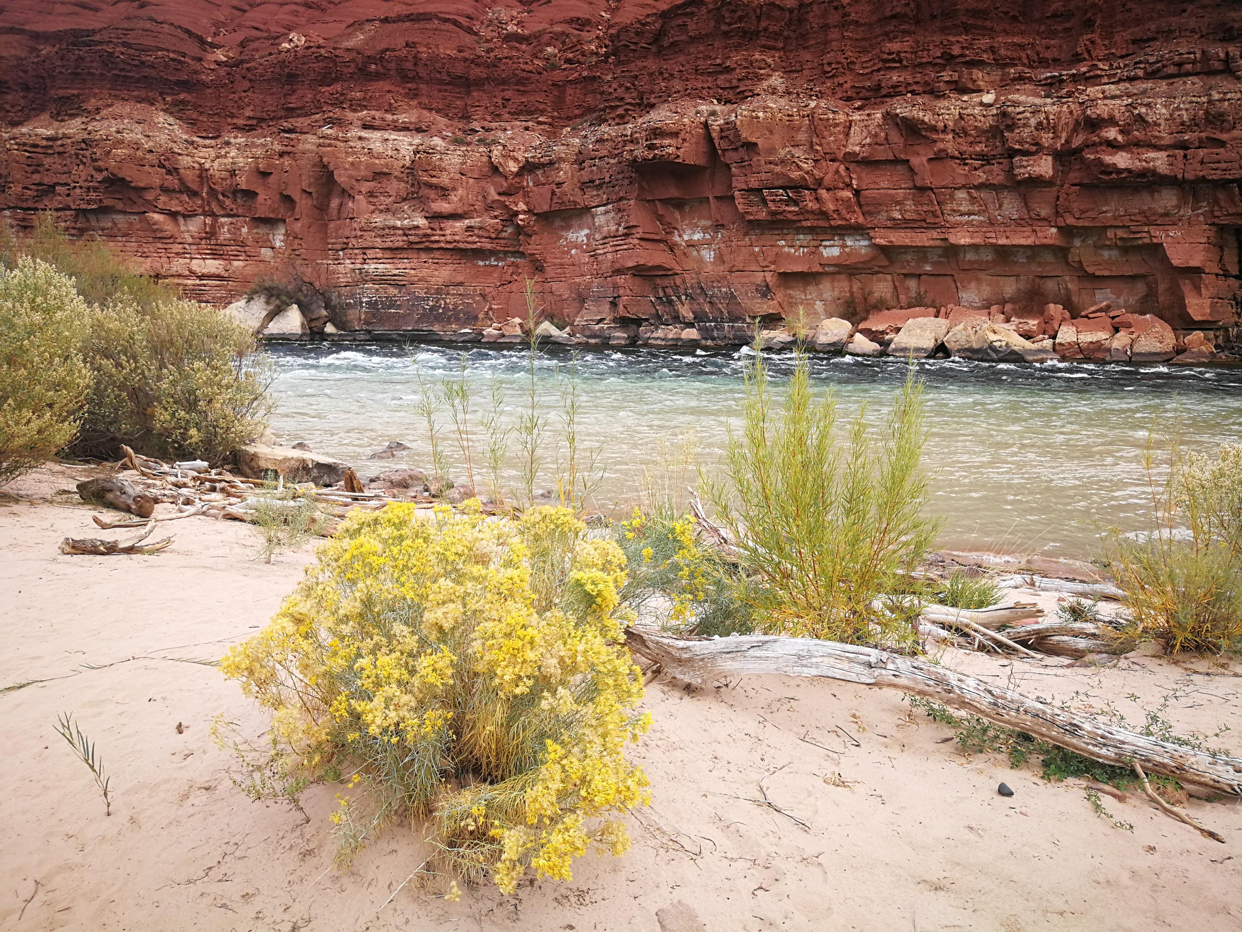 Am Ufer des Colorado